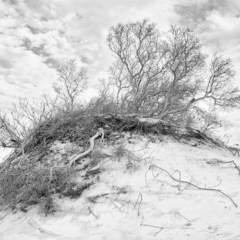 Dune-iii---JohnTunney