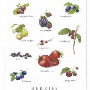 berries-stranz