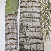 palms_sketchbook