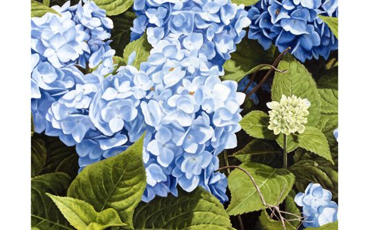 Call to Artists -2017 Hydrangea Festival Poster Contest